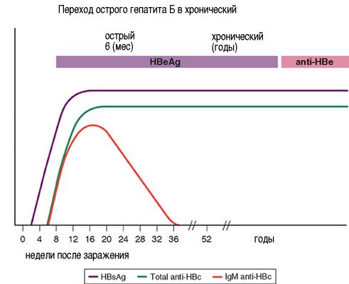Переход острого гепатита В в хронический