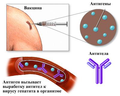 Вакцинация против гепатита
