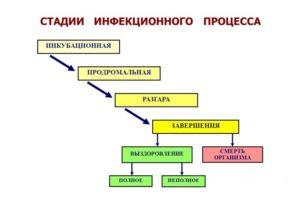 Стадии вирусного гепатита