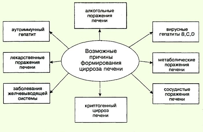 Причины цирроза
