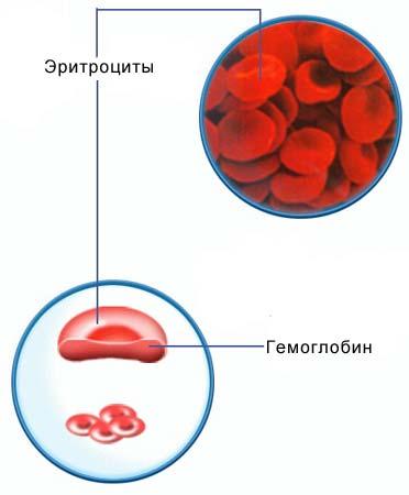 Определение гемоглобина