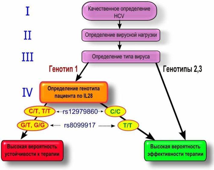 Рекомендованный алгоритм обследования перед началом терапии гепатита С