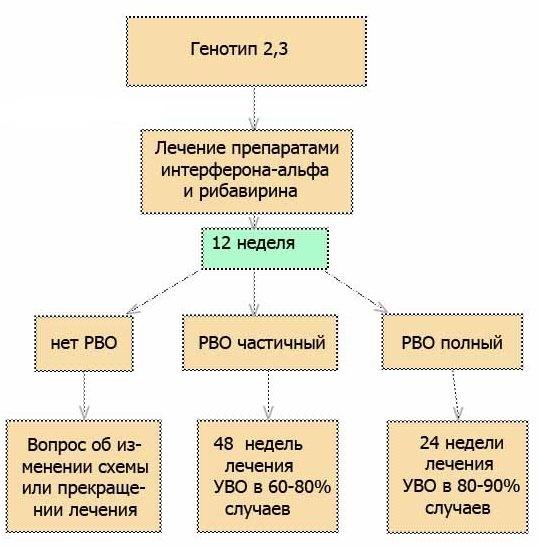 Схема лечения гепатита С генотипа 2 и 3
