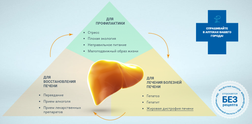Лечение и восстановление печени Фосфогливом