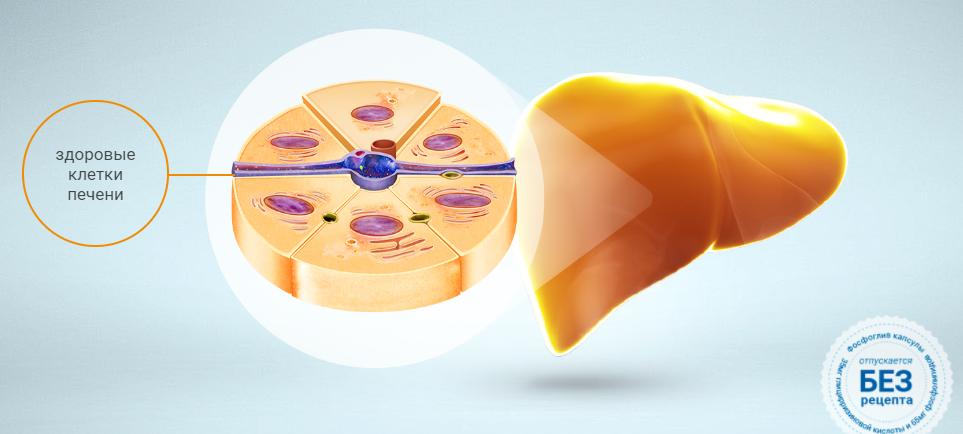 Ликвидация причин повреждения и восстановление гепатоцитов нормализует функции печени