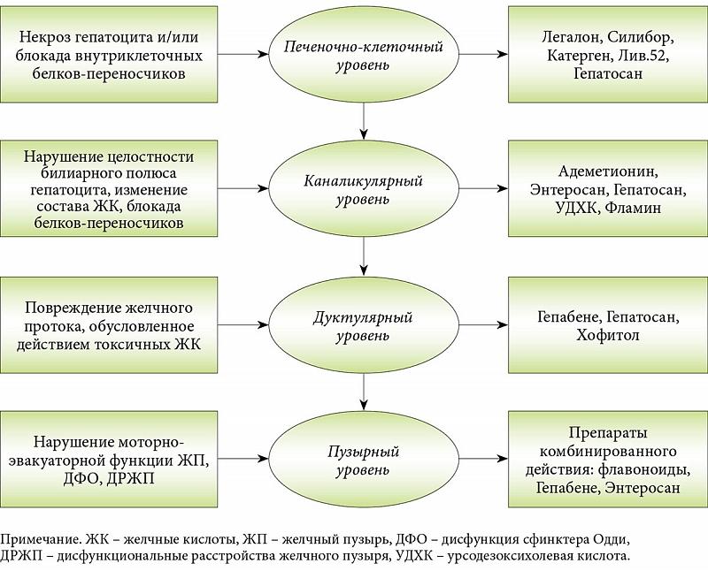 Назначение гепатопротекторов в зависимости от степени нарушения формирования желчи