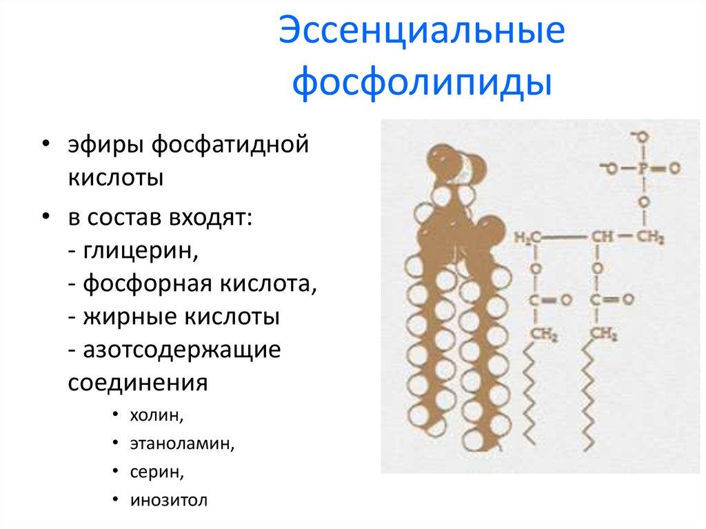 Состав эссенциальных фосфолипидов