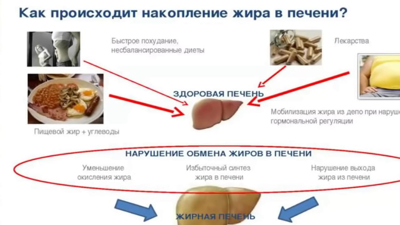 Процесс накопления жира в печени