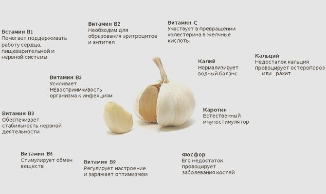 Витамины в чесноке