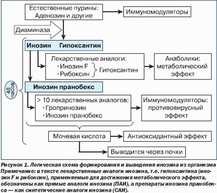 Механизм выведения инозина из организма