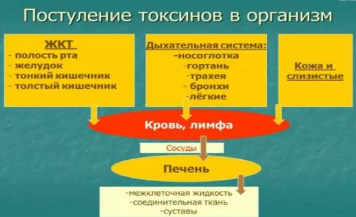 Процесс поступления токсинов в организм