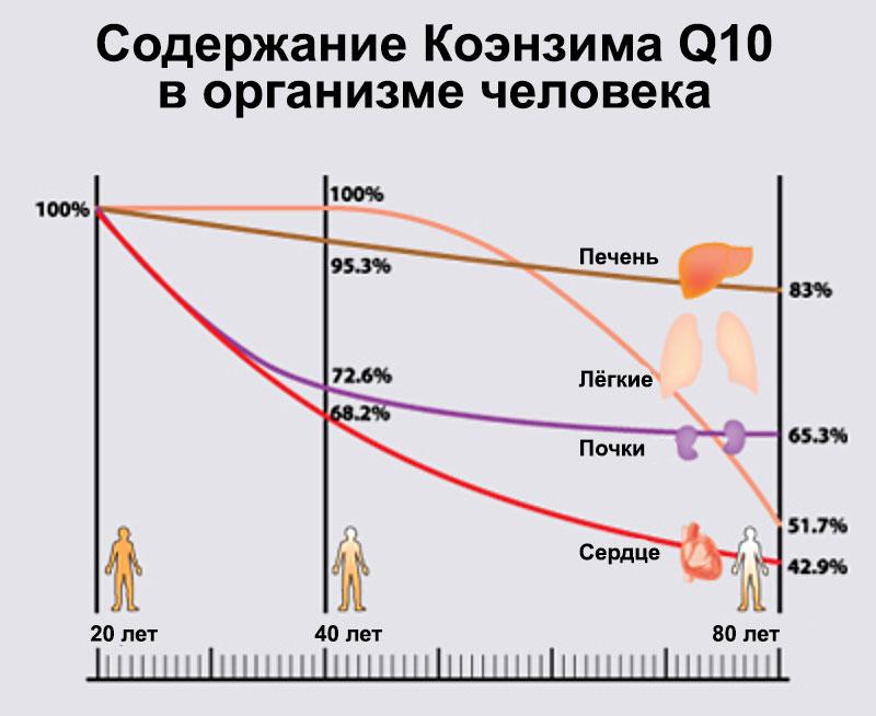 Коэнзим Q10 в организме