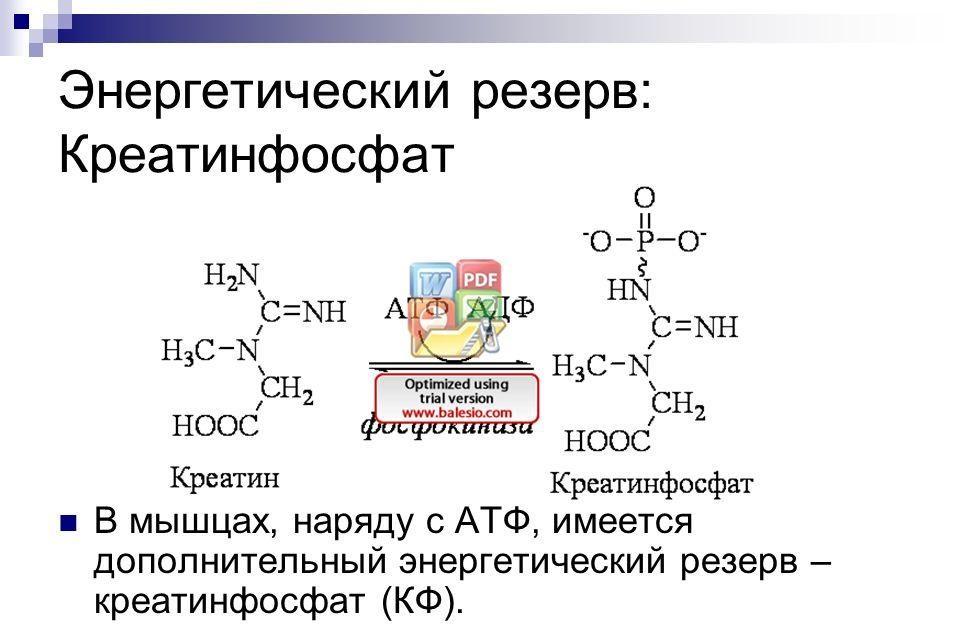 Креатинфосфат
