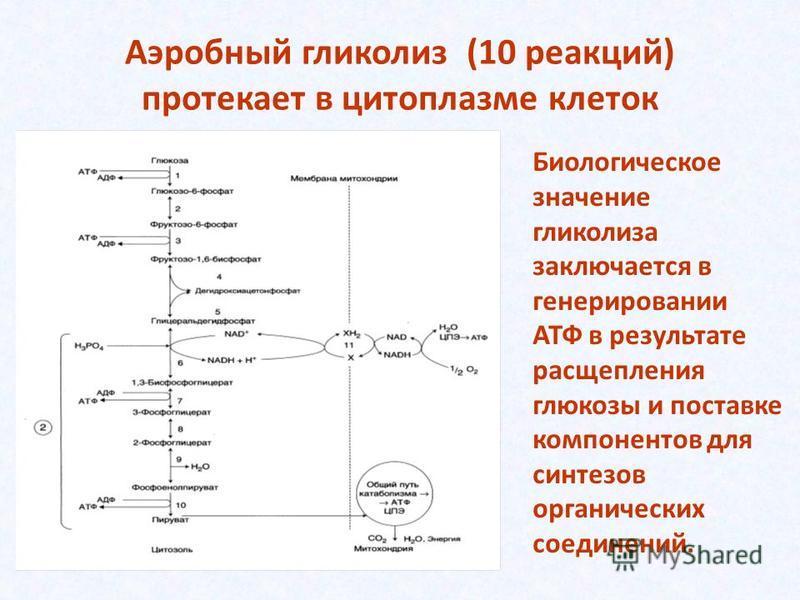 Аэробный гликолиз