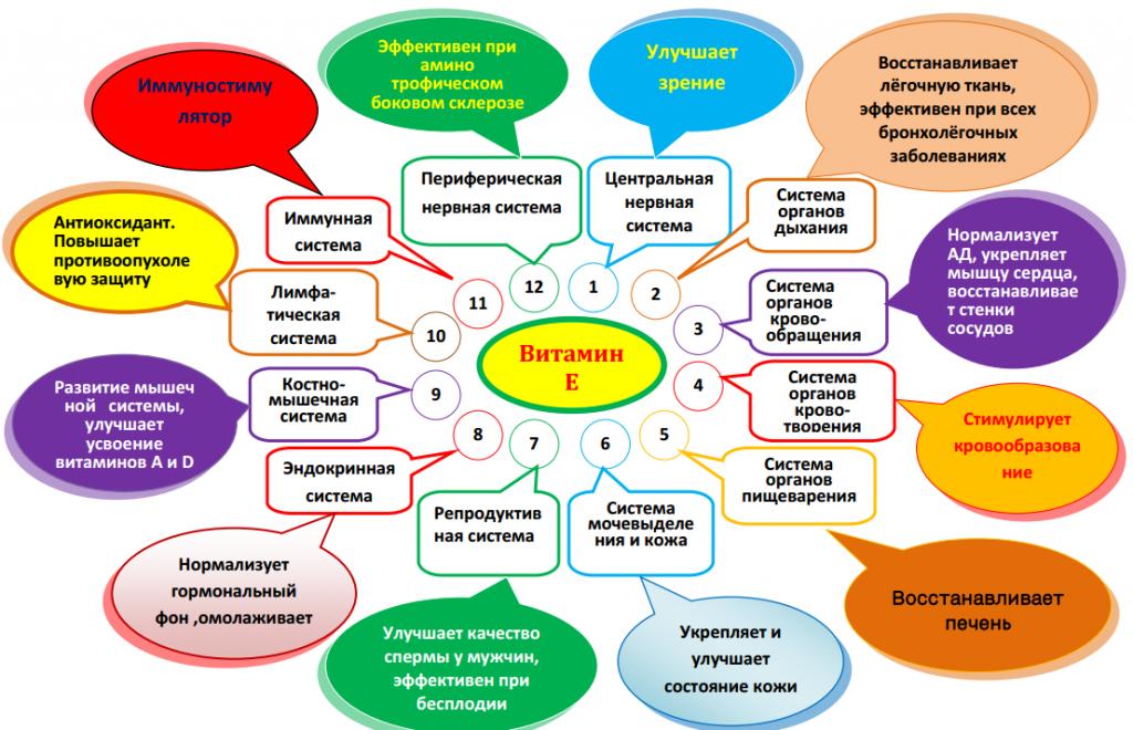 Действие витамина E в организме