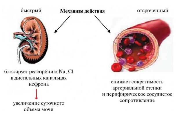 Механизм действия индапамида