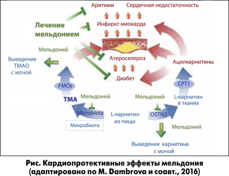 Кардиопротективные эффекты