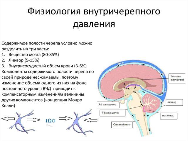 Физиология внутричерепного давления