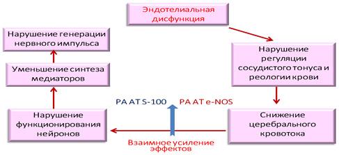 Механизм действия Дивазы
