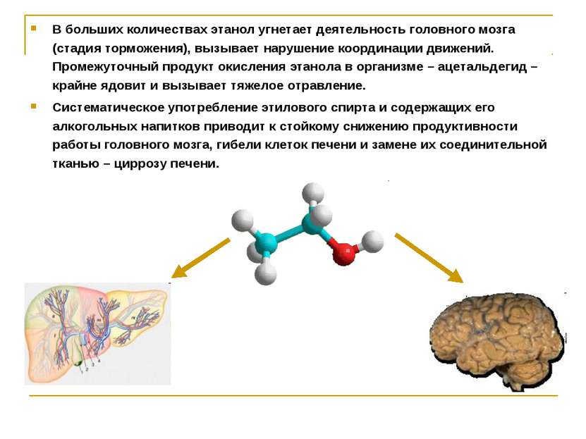 Воздействие этанола на организм