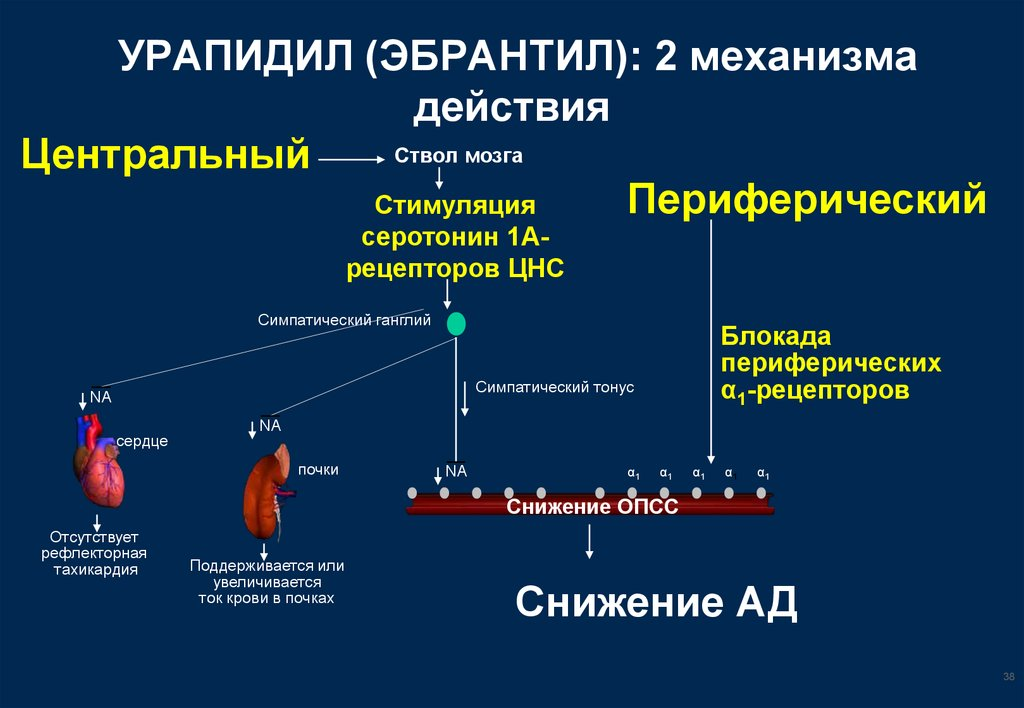 Механизм действия Эбрантила