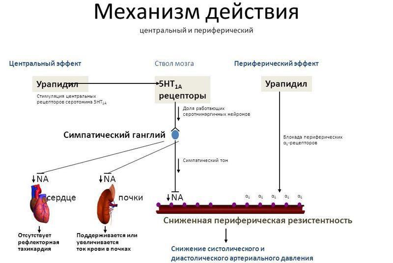 Механизм действия Урапидила