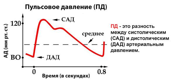 Понятие пульсового давления