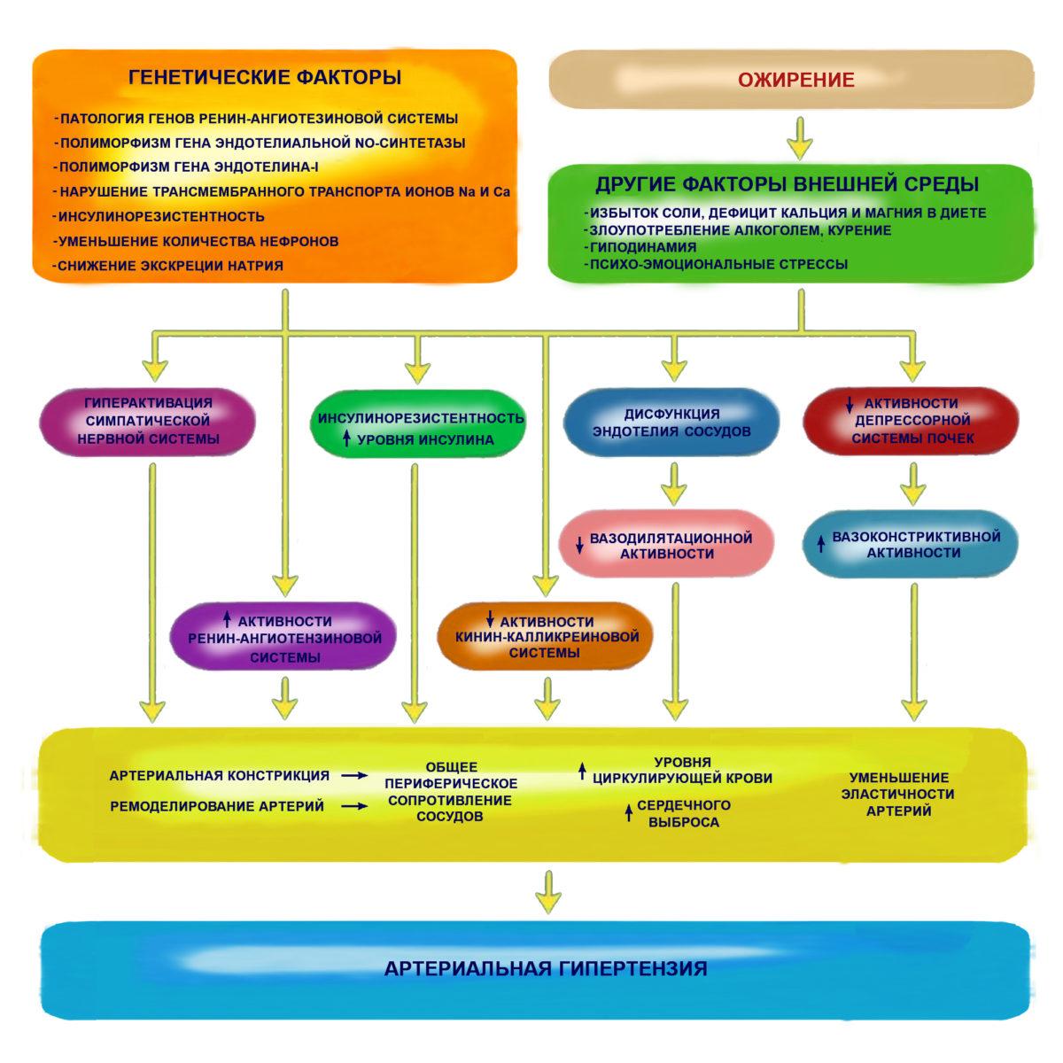 Процесс развития АГ