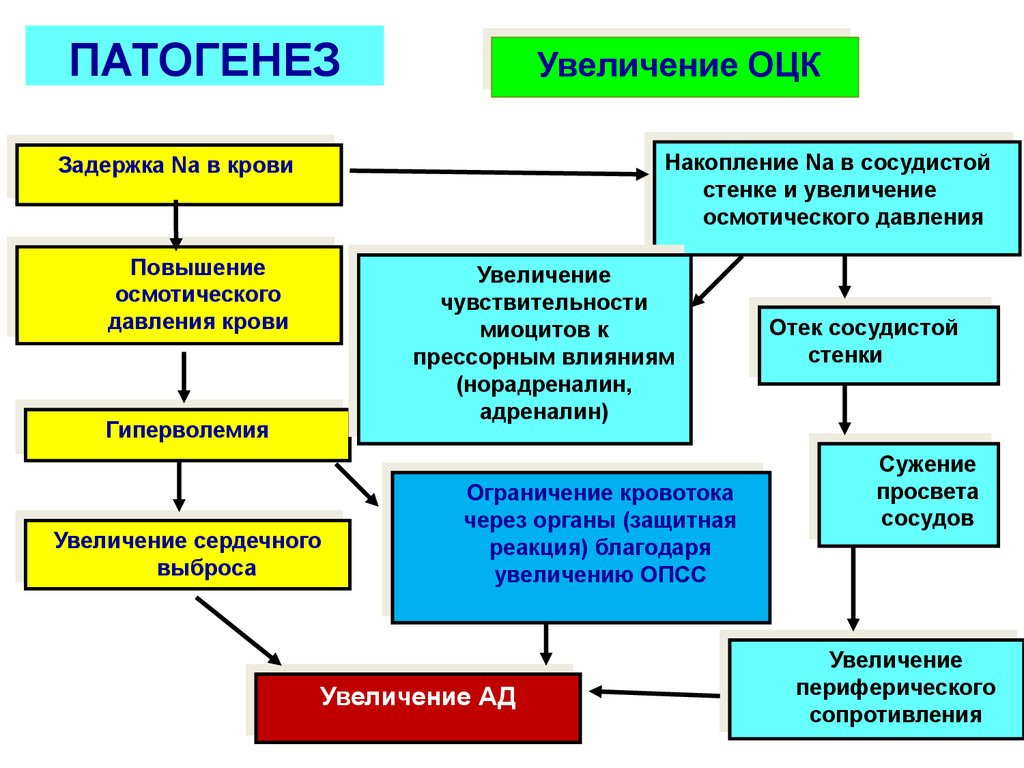 Патогенез гипертонии