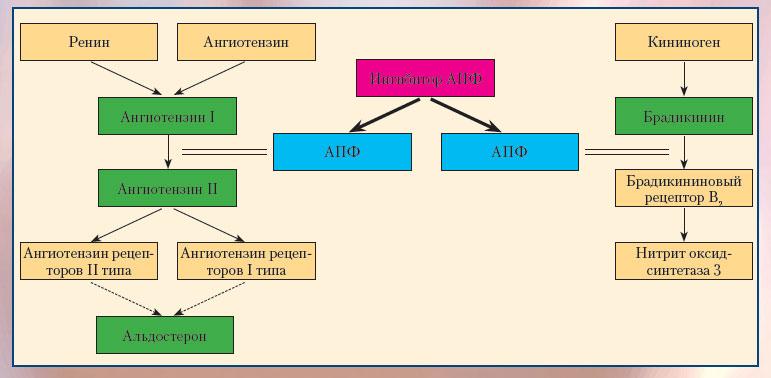 Основные звенья фармакологического действия ингибиторов АПФ