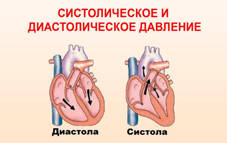 Систола и диастола