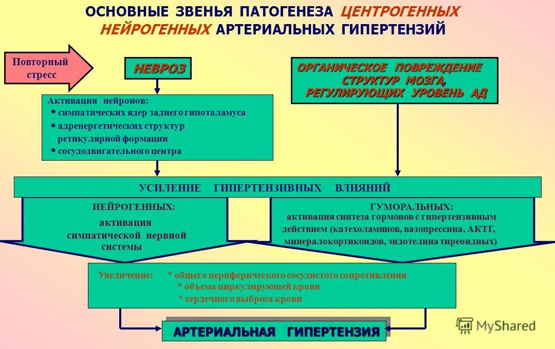 Патогенез нейрогенных гипертензий