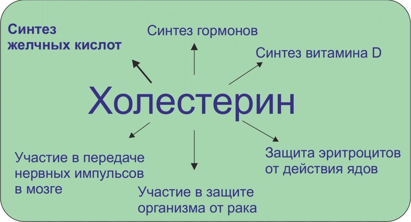 Роль ХС в организме