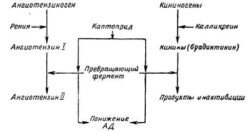 Механизм действия