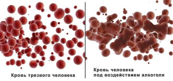 Влияние алкоголя на реологические свойства крови