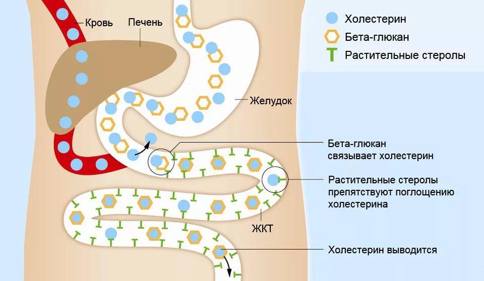 Бета-липопротеиды