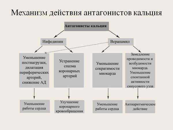 Механизм действия антагонистов кальция