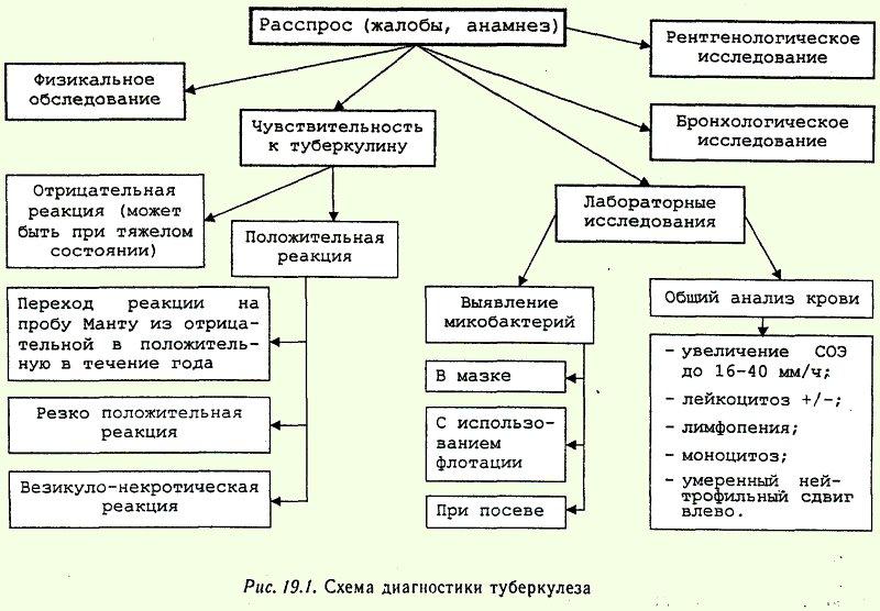 Схема диагностики туберкулеза