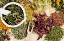 Лечение печени травами