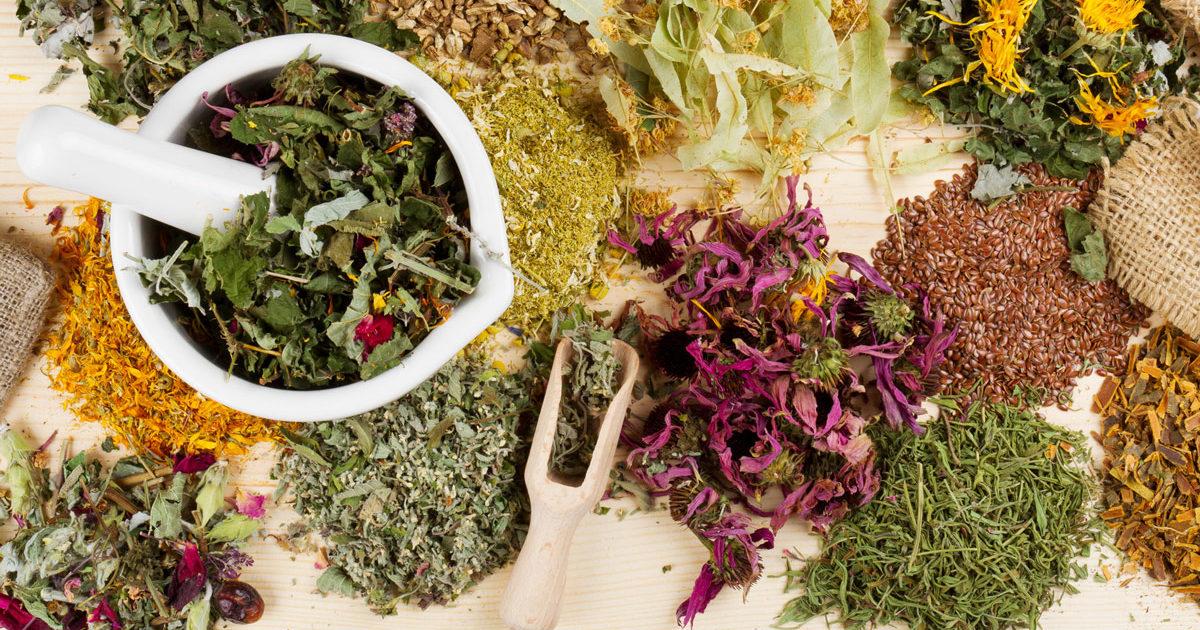 Травы для печени (печеночный сбор для очистки): отзывы, цена и свойства
