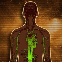 Влияние токсинов на печень