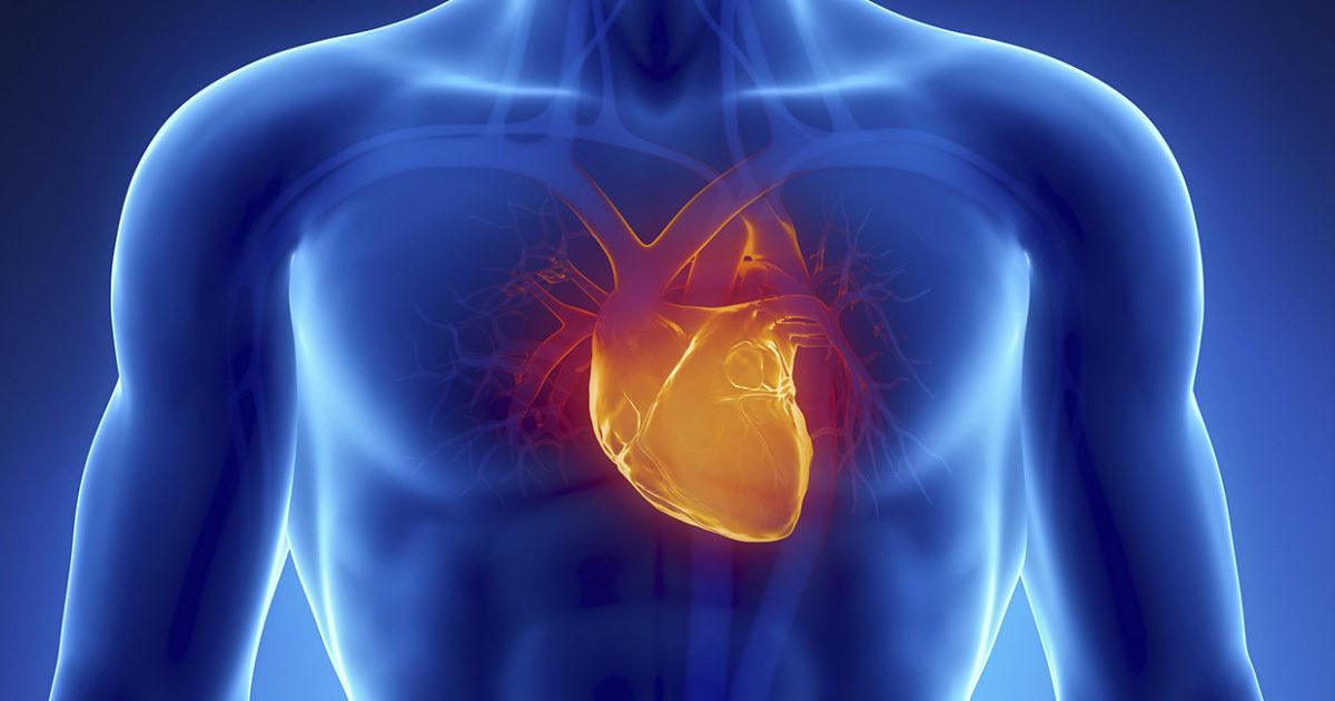 Причины и лечение кардиомегалии или синдрома бычьего сердца