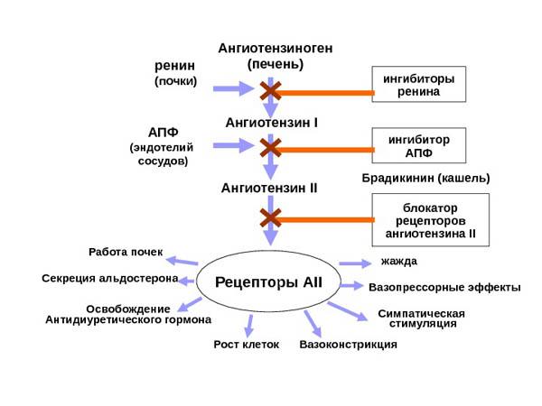 Изображение - Лозон таблетки от давления preparat-Lozartan-instruktsiya-po-primeneniyu-pri-povyishennom-davlenii-2-1