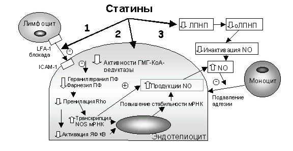 механизм действия статинов картинки пирсинга месте прокола