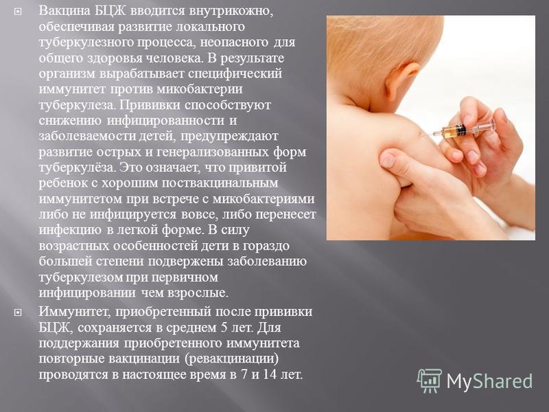 Вакцина БЦЖ