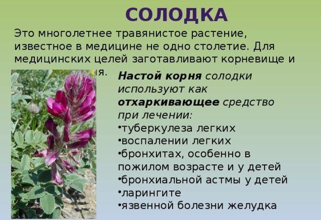 Солодка