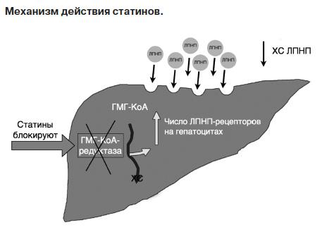 Механизм действия розувастатина