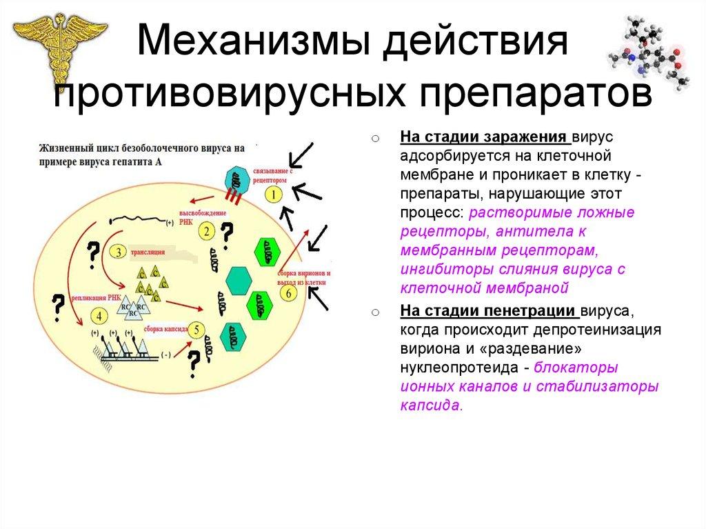 Механизм действия ремантадина