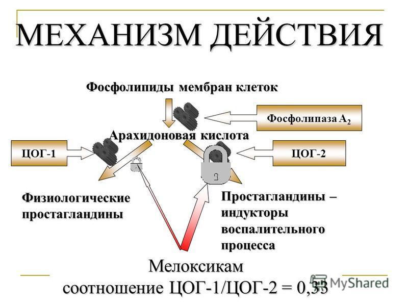 Механизм действия мелоксикама