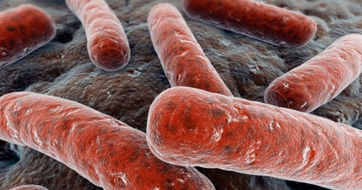 Возбудитель туберкулеза - палочка Коха